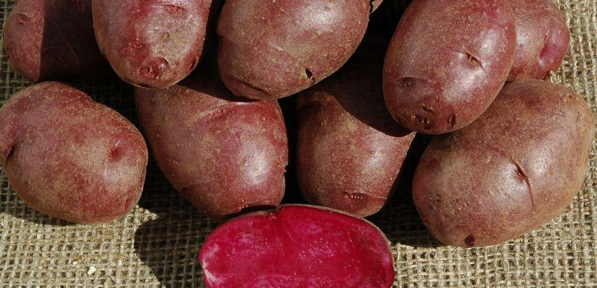 Purple potatoes, anyone?