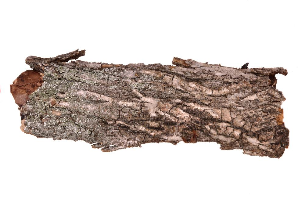 Researchers at the University of Freiburg have developed a technique for making foam from a compound found in tree bark (Photo: Shutterstock)