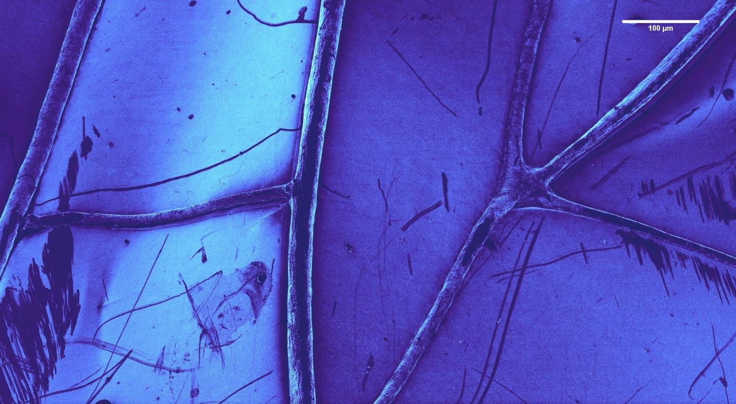 False color image of a dragonfly wing
