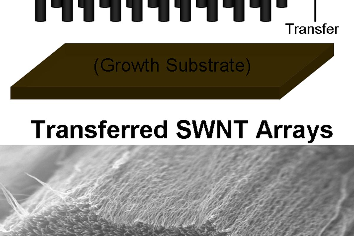 A method developed at Rice University allows bundles of vertically aligned single-wall carbon nanotubes to be transferred intact to a conductive substrate