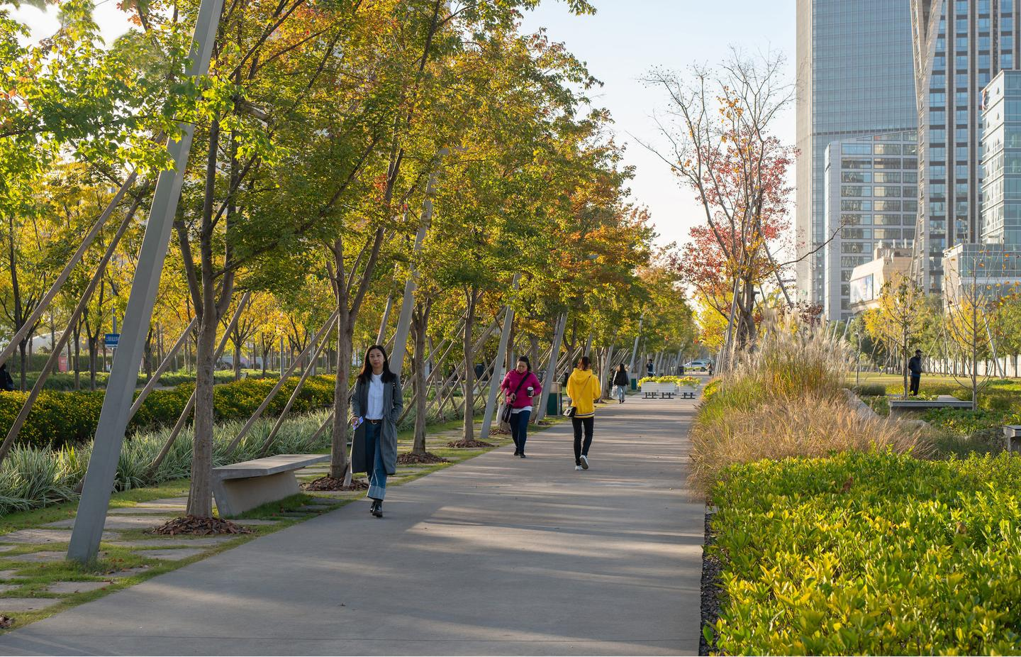 The Xuhui Runway Park contains a total of 82 local plant species and 2,227 trees