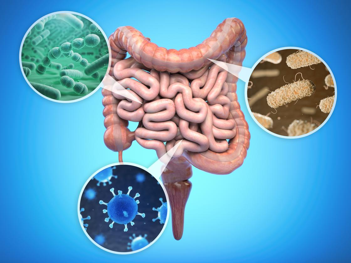 Two studies suggest a general healthy diet is the best way to maintain gut bacteria diversity and general health