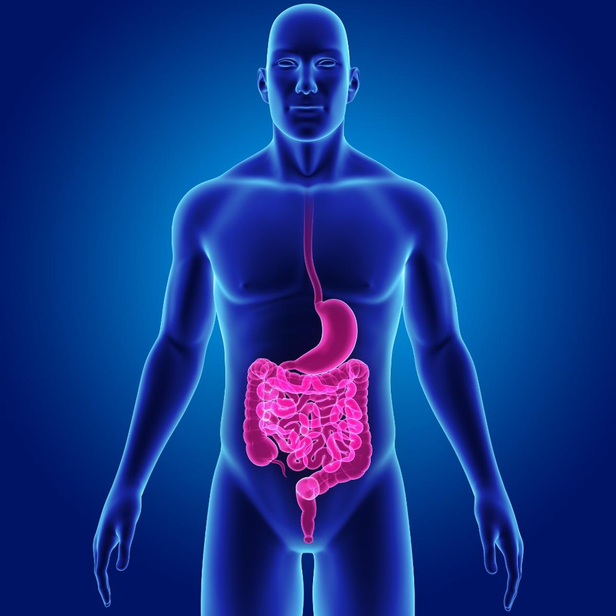"""""""Rebooting"""" a patient's immune system using stem cells is being explored as a treatment forCrohn's disease"""