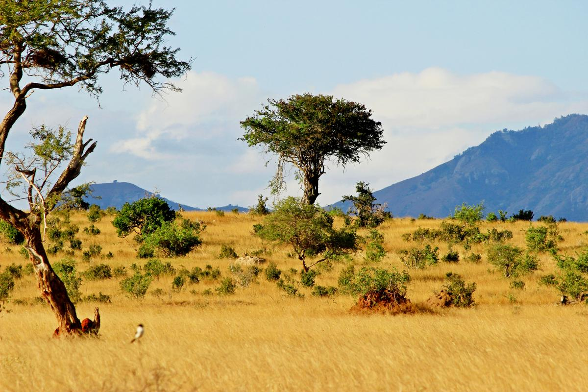 A new study has found that tree and shrub coverage is on the up in the world's savannas and tundras
