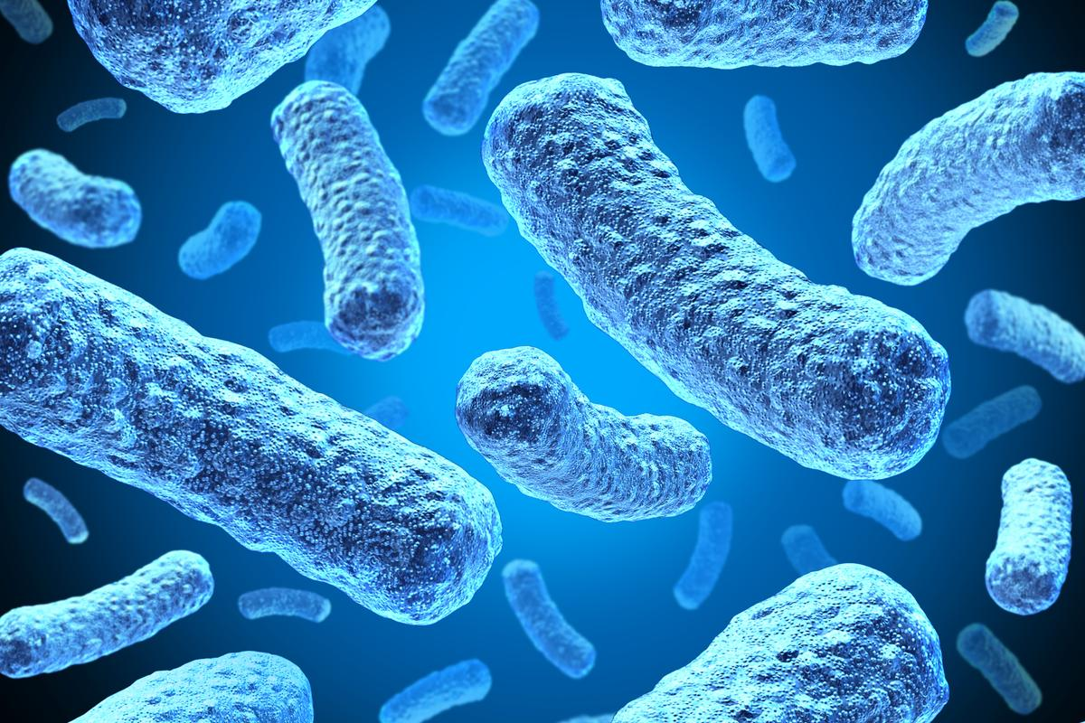 Researchers have developed a new biohybrid battery design that harvests electricity from bacteria