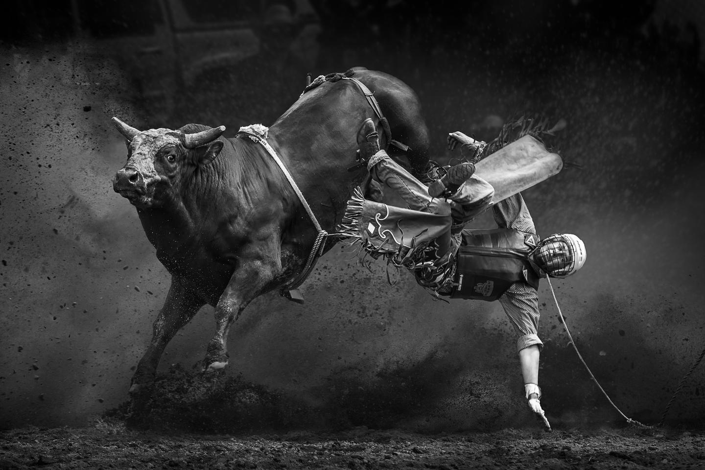 Honorable Mention - Break Away. A man falling off a bull in a rodeo event held in Taralga Australia