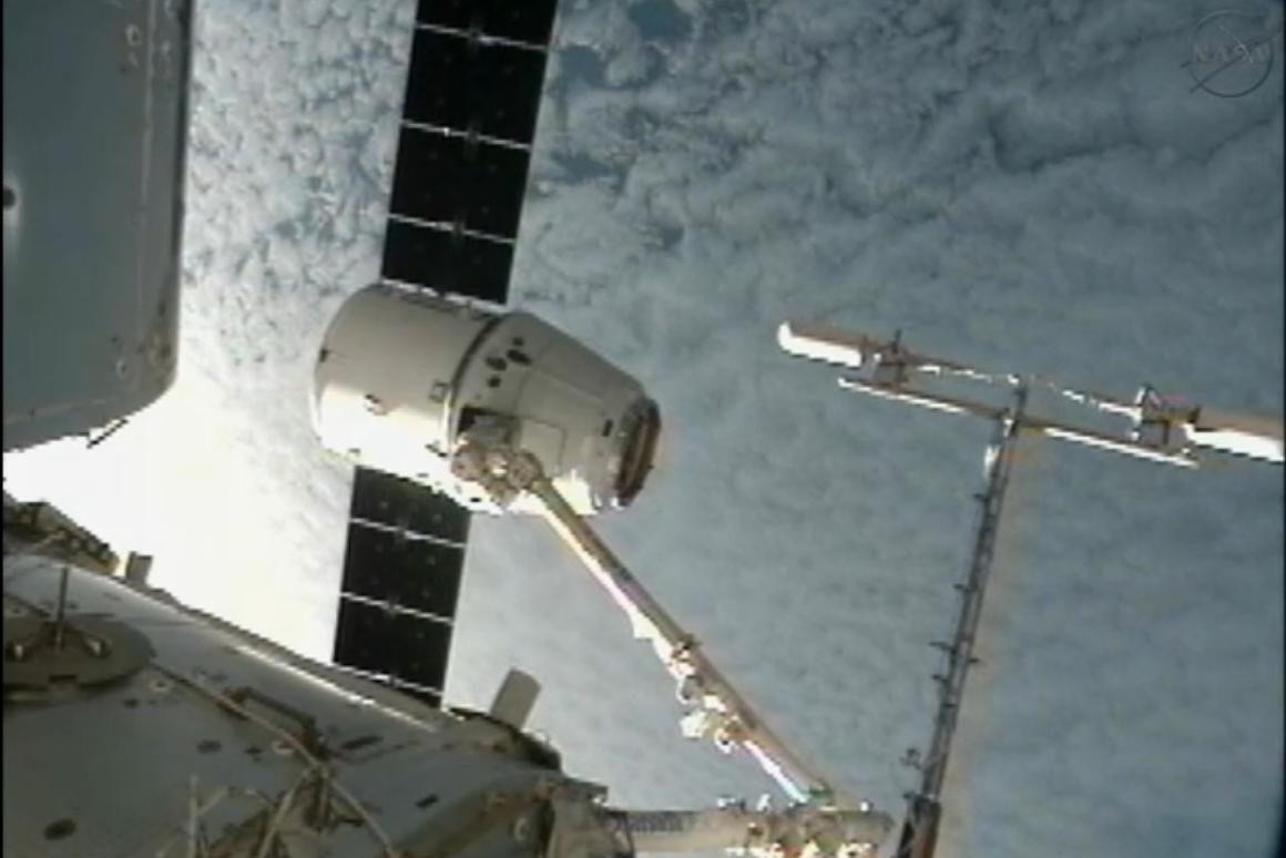 Dragon captured by an ISS robot arm (Image: NASA)