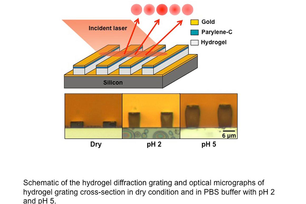 A diagram illustrating how the hydrogel sensor works (Image: Birck Nanotechnology Center, Purdue University)