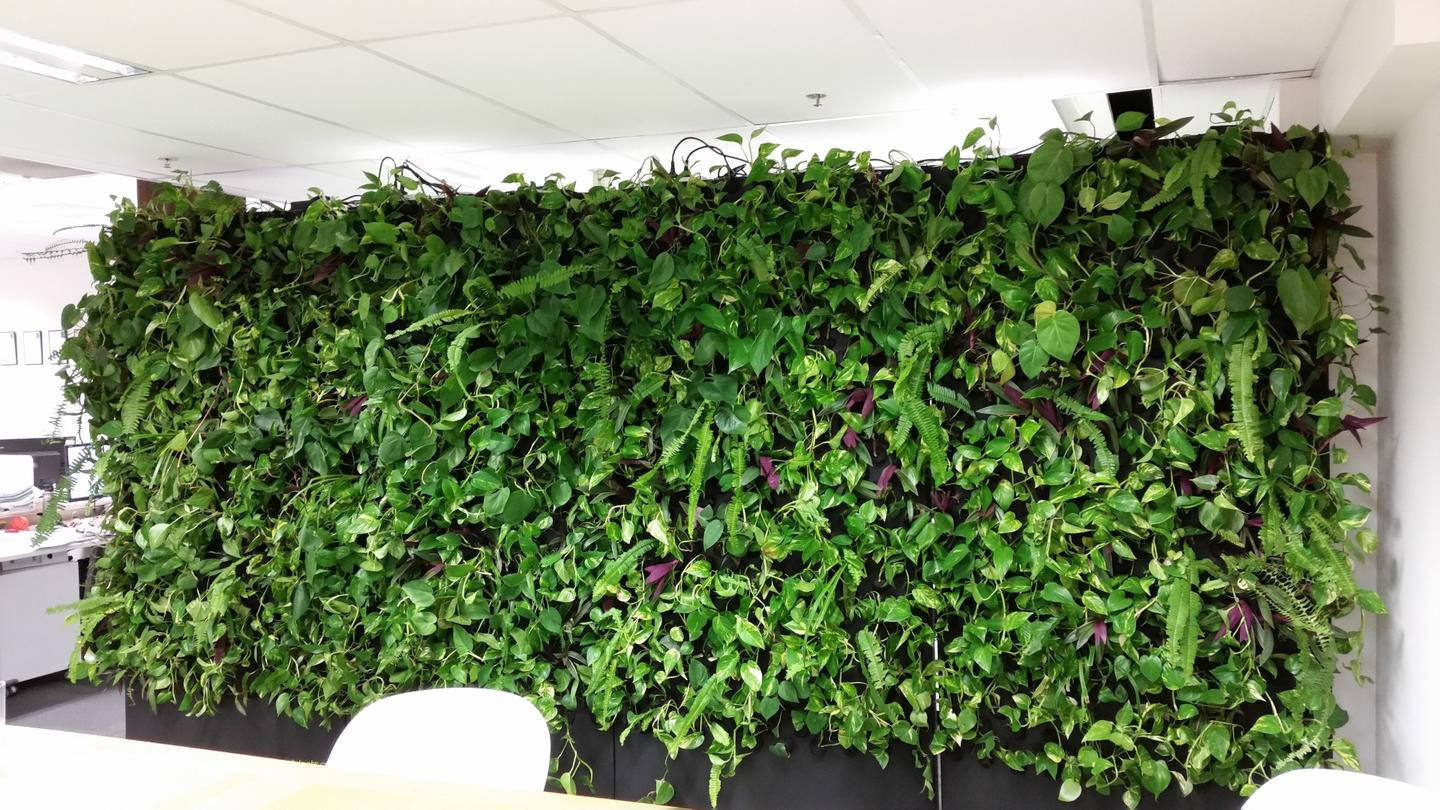 The vertical garden is stabilized by a reservoir of water in the bottom of each unit and because it is freestanding, it can be placed in front of an existing wall