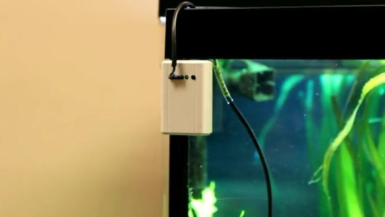 The Knut can monitor the temperature of your home or aquarium