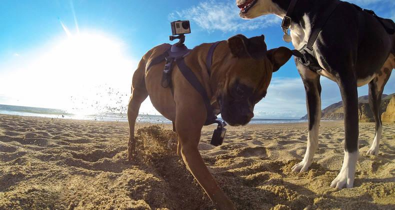 The GoPro Fetch is a harness that lets GoPro user's mount their cameras on their dogs