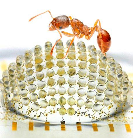 An ant, with the hemispherical camera