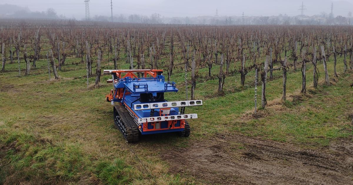 Slopehelper agricultural robot tends to steep vineyards