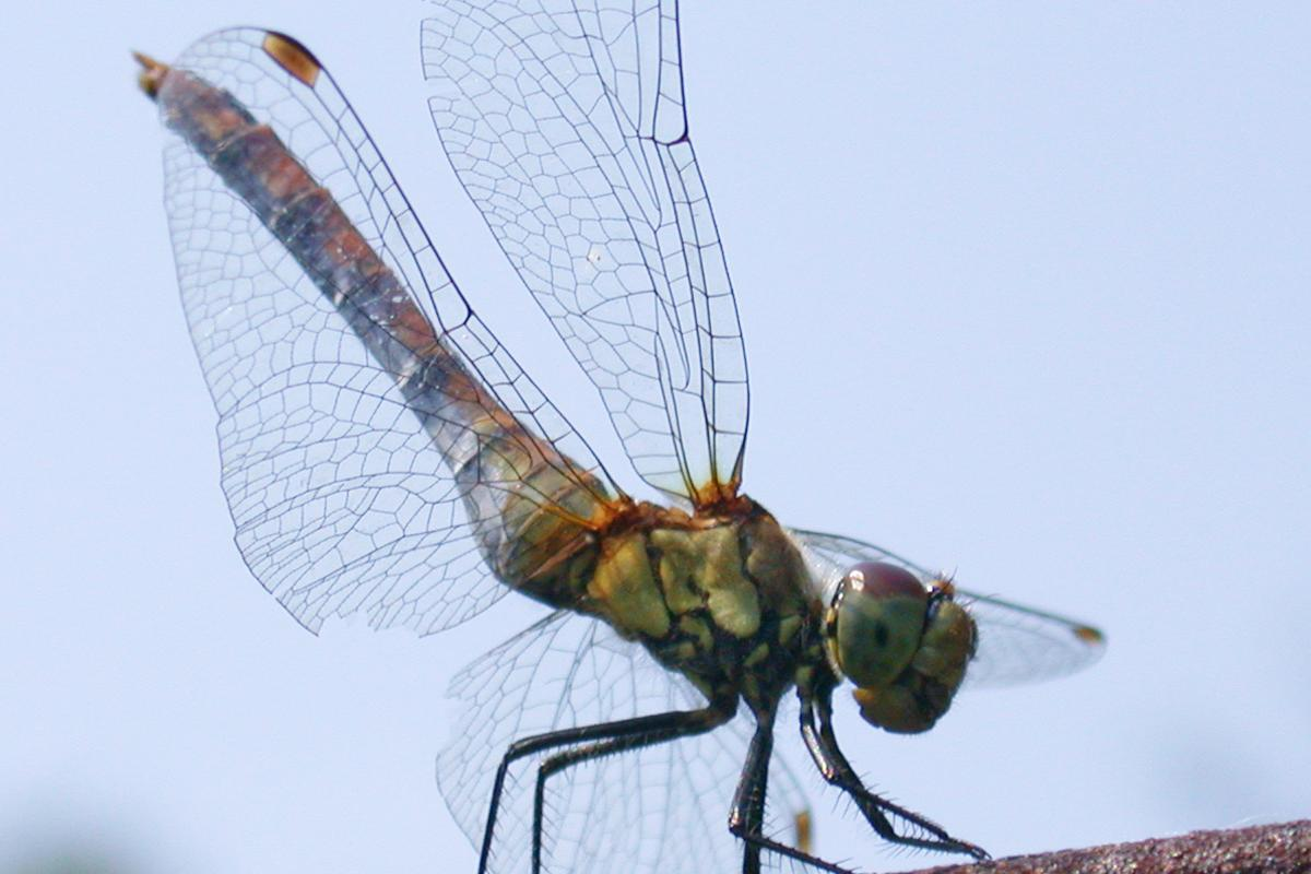 Scientists have taken inspiration from dragonfly wings to develop new splints for injured joints that offer support but don't restrict movement