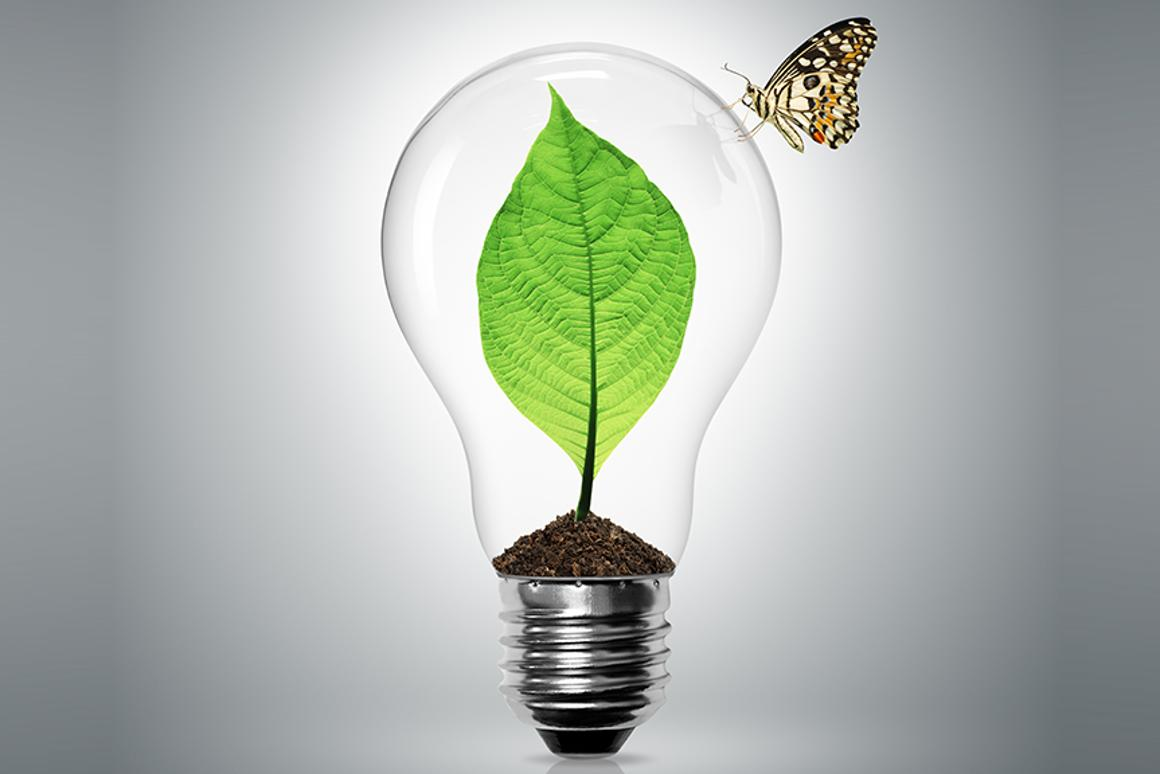 New technology out of the University of Georgia allows energy generated by plants through photosynthesis to be captured before the plants can make use of it (Image: Shutterstock)