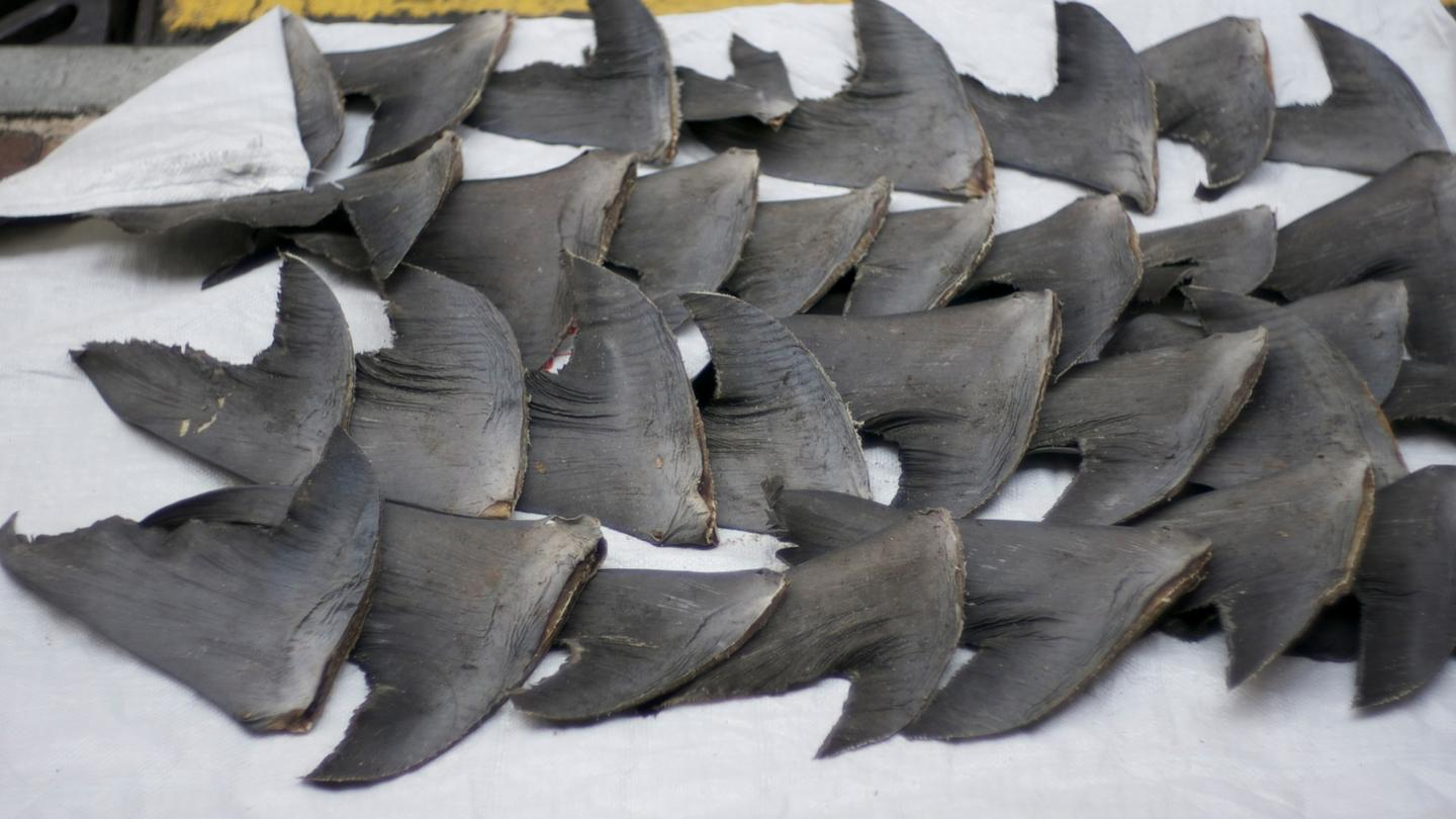 Fresh shark fins drying on a sidewalk in Hong Kong