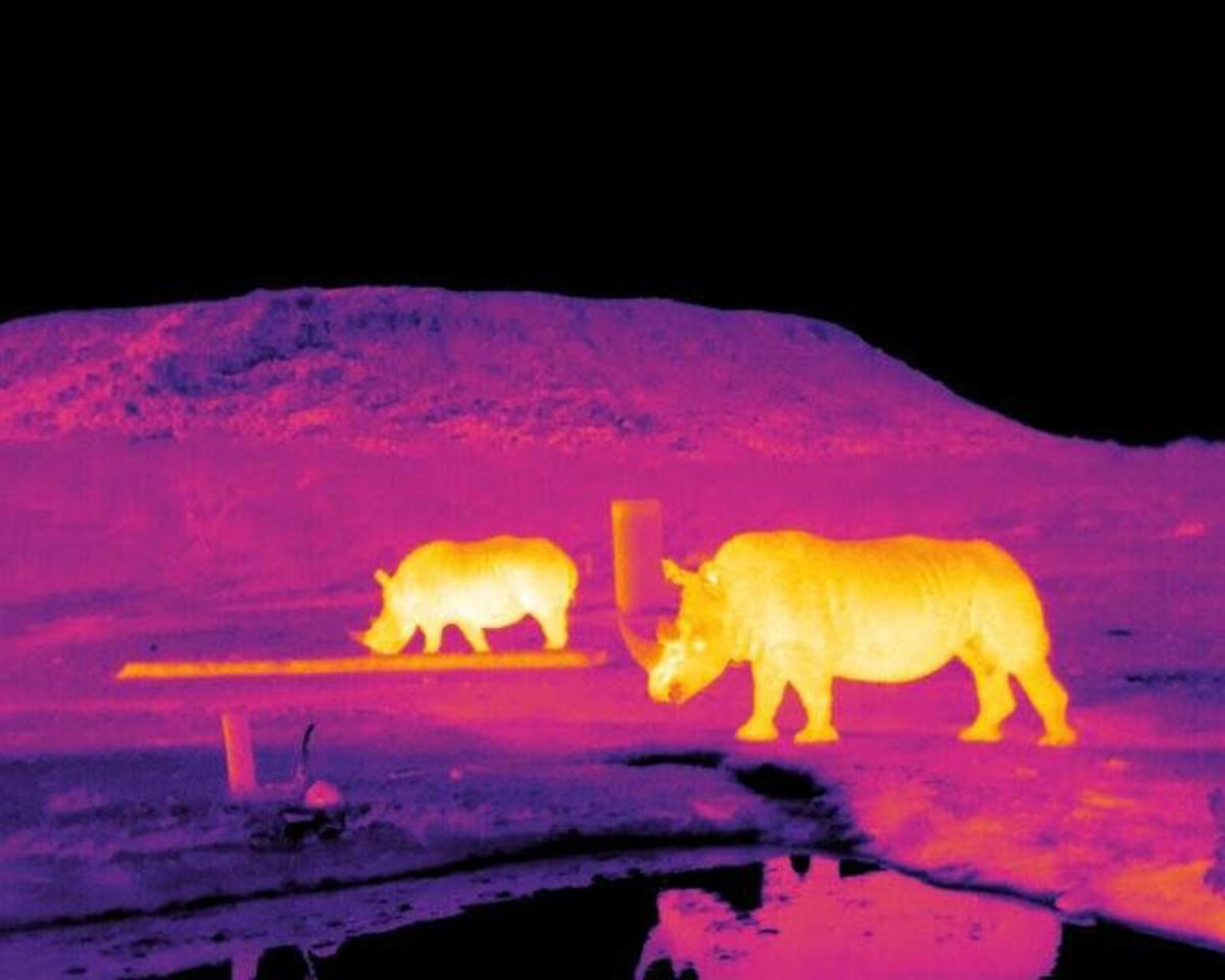 Infrared images of rhinos captured in field trials in South Africa of a new drone-based system