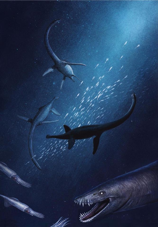An artist's rendition of the new species of plesiosaur, dubbed Lagenanectes richterae