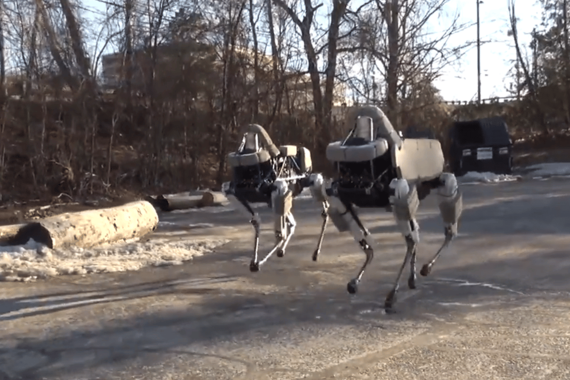 Two Spot robots operating together