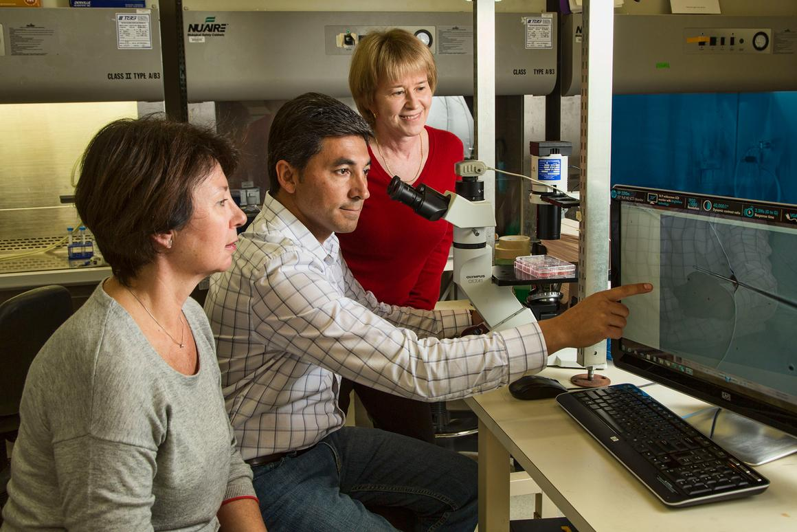 Salk Institute researchers studied thousands of molecules to shed new light on the development of drug-resistant cancer cells (Photo: Salk Institute for Biological Studies)