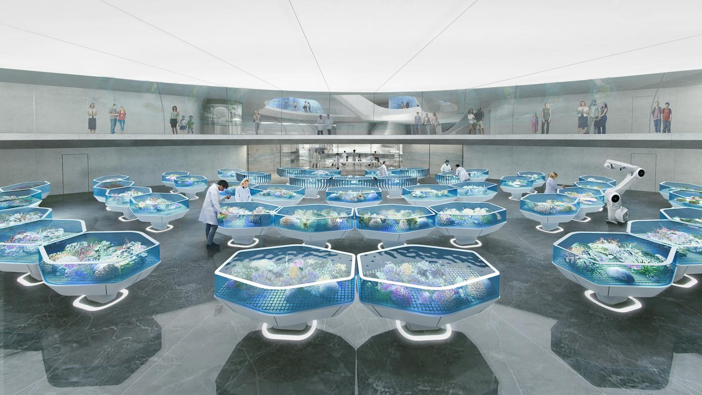 The Living Coral Biobank will aim to keep over 800 species of hard coral alive