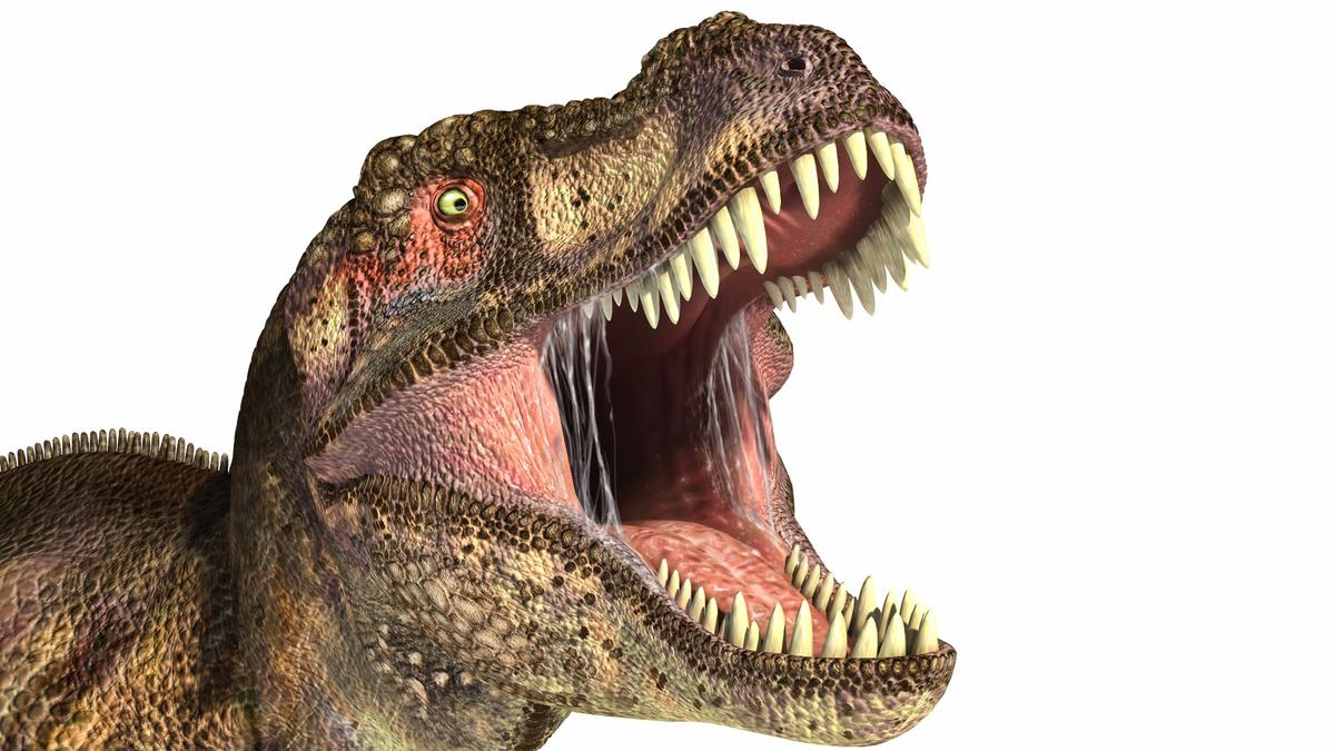 Researchers have calculated the bite force of a Tyrannosaurus Rex to be about 8,000 pounds, twice as powerful as a modern crocodile