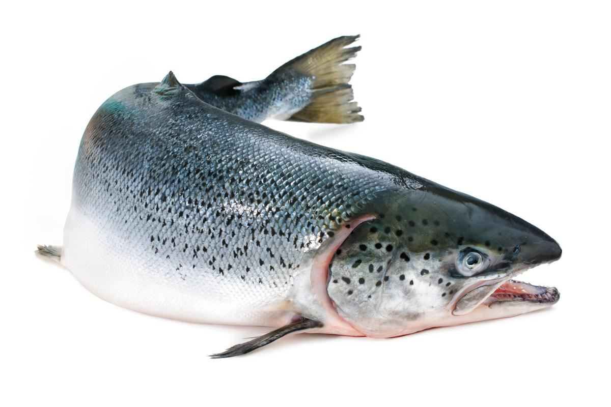 Farmed salmon have much lower omega-3 levels than they used to, due to a reduced use of fish oil in their feed