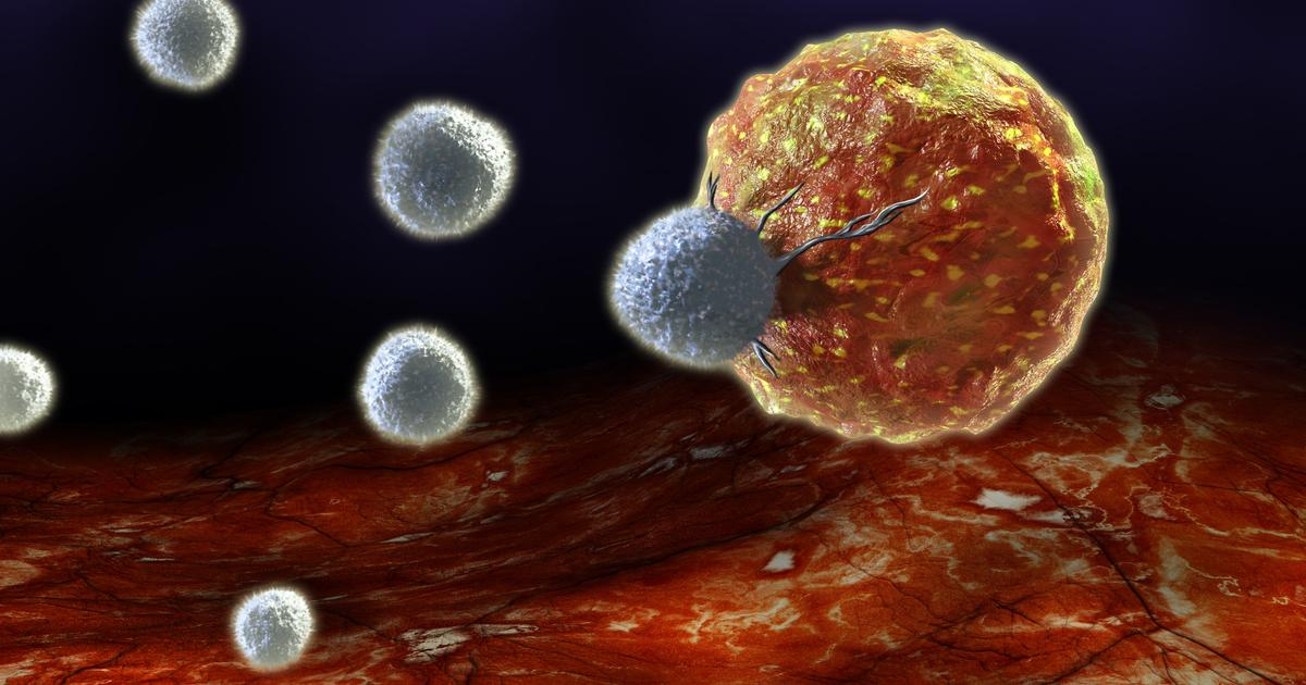 Cancer immunotherapy boosted by two new Yale studies