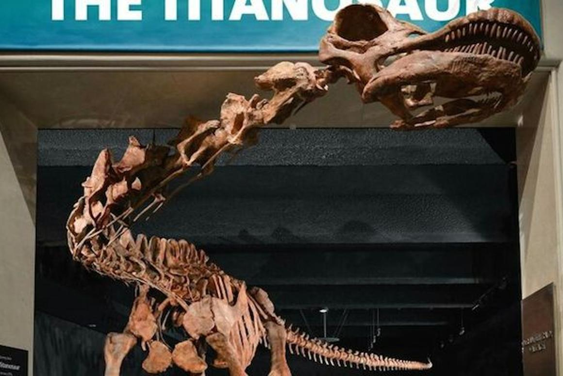 A replica of the Patagotitan mayorum, the largest land animal to ever walk the Earth, is on display at theAmerican Natural History Museum