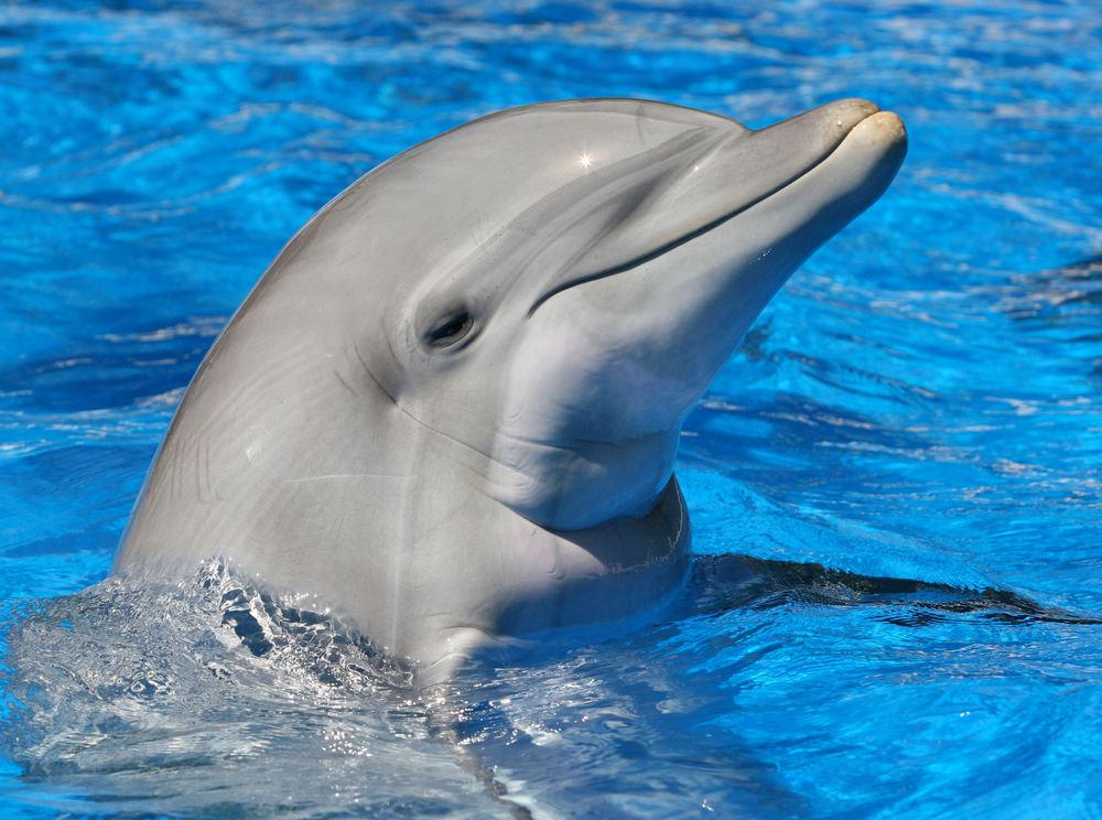 Scientists have created an underwater speaker for use in studying dolphin communication (Photo: Shutterstock)