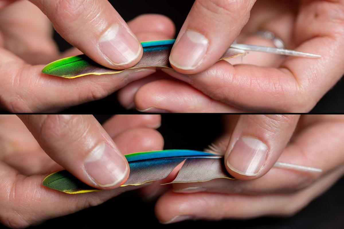 A feather's barbs are pulled apart, in a manner that was replicated using  large-scale 3D-printed models
