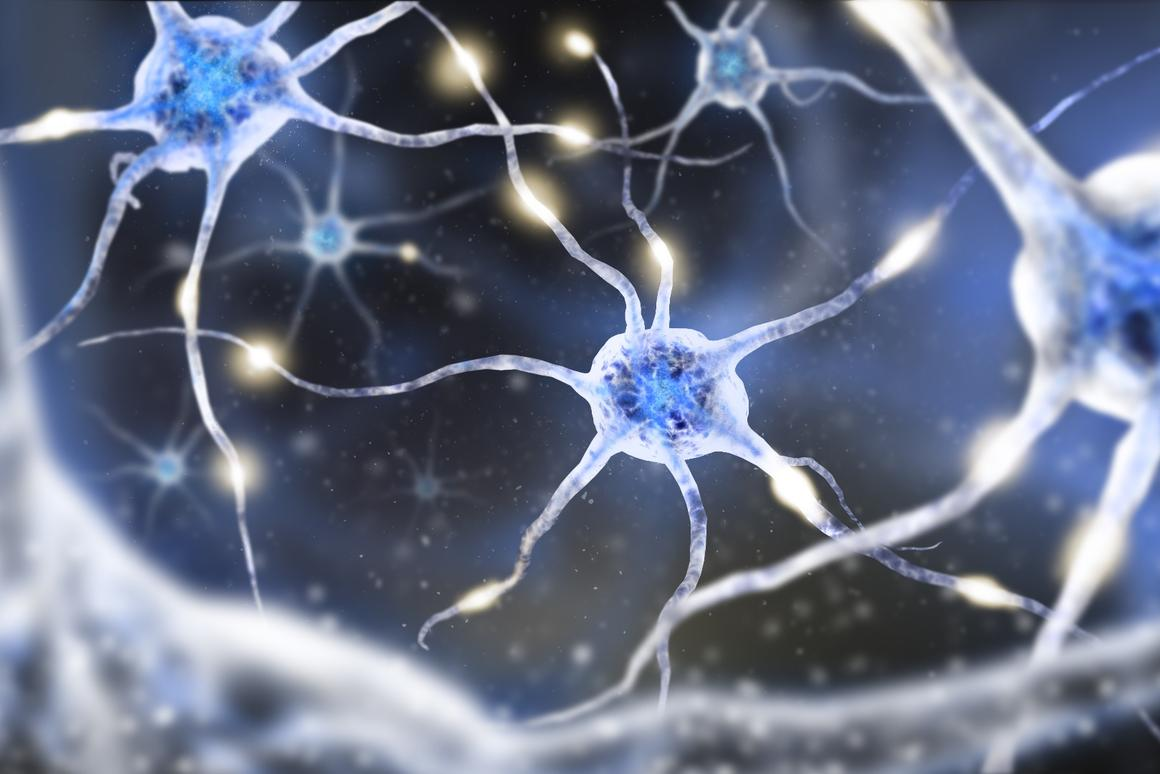 New research has found evidence that individual neurons can rapidly switch between two signals at once