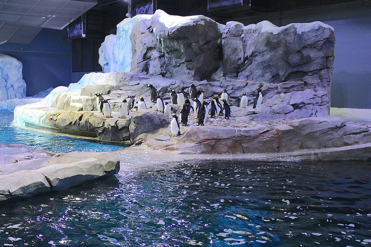 The Polk Penguin Conservation Center covers 33,000 sq ft (3,066 sq m)