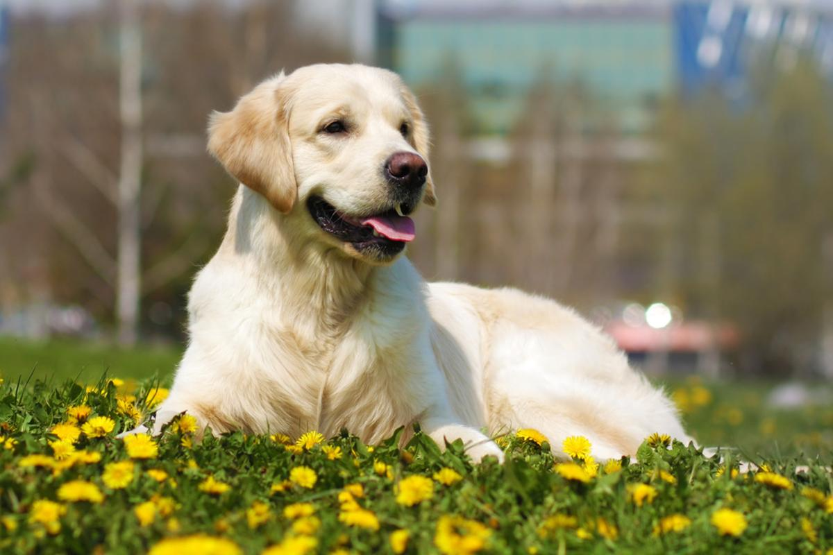 Scientiststracked the sperm quality of five different breeds of dog over a 26-year period