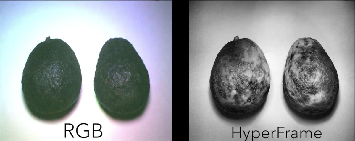 Avocados shot by a regular RGB camera (left) and by the HyperCam, showing their level of ripeness
