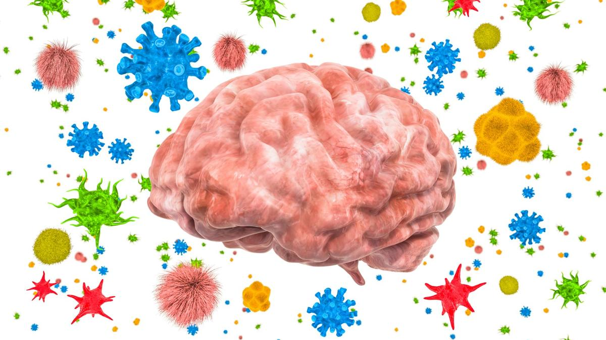 Gut bacteria found to help protect brain and central nervous system from harmful viruses