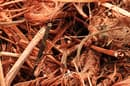Researchers have                               isolated a bacterium that can convert                               toxic forms of copper into useable                               metallic copper