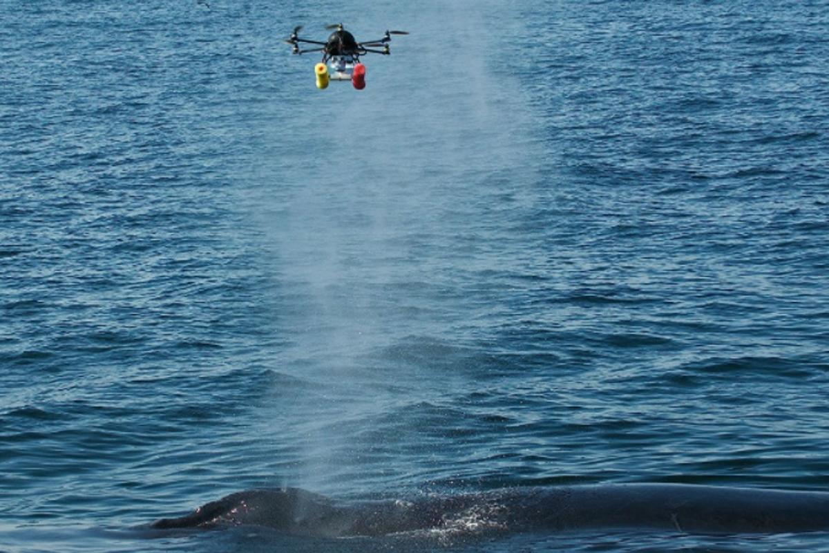 "A hexacopter gets a full load of whale ""blow"""