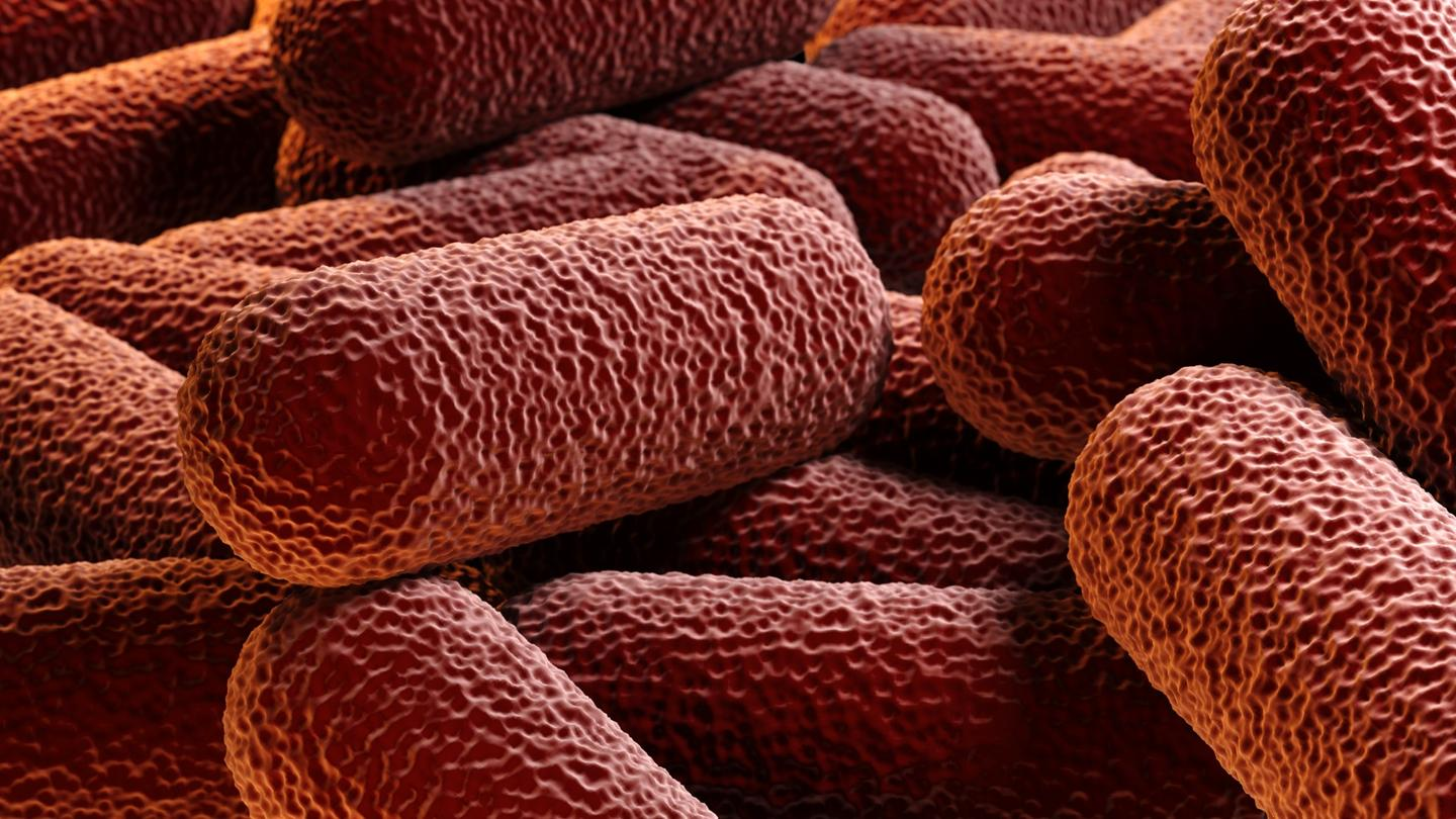 Researchers have found a new way to weaken bacterial defenses against antibiotics