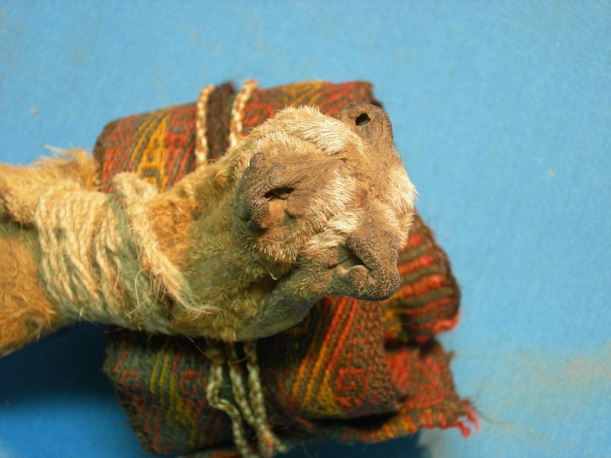 Researchers found psychoactive compounds in an animal-skin pouch constructed of three fox snouts stitched together