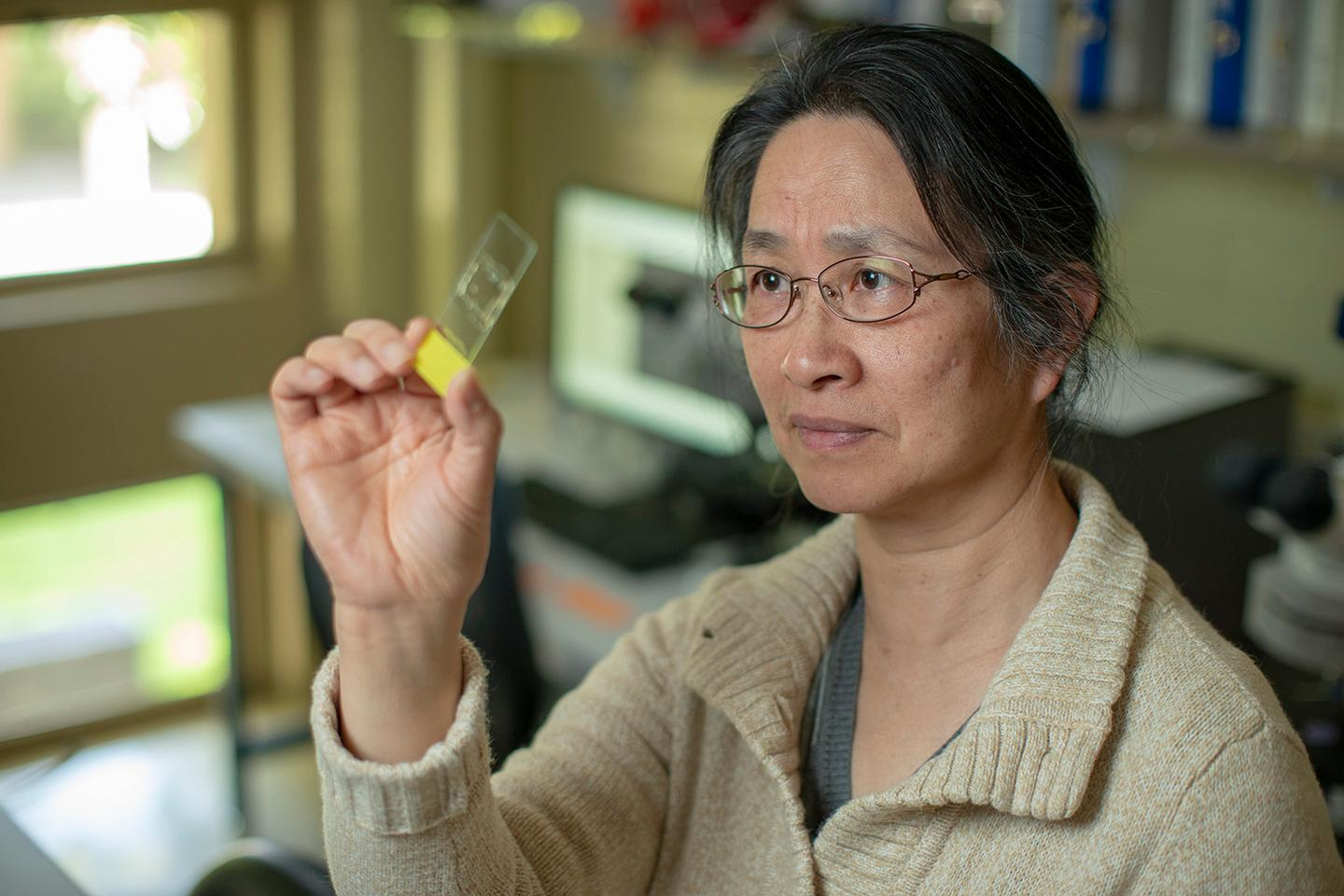 Professor Li Liu, inspecting ancient grain traces