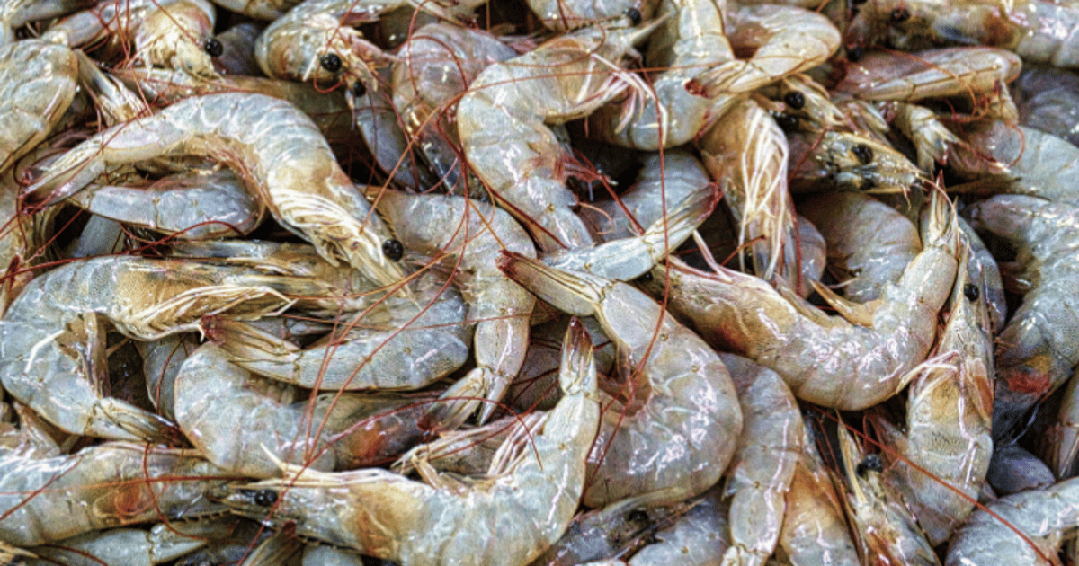 Shrimp shells to serve as the basis for new multi-protective coatings