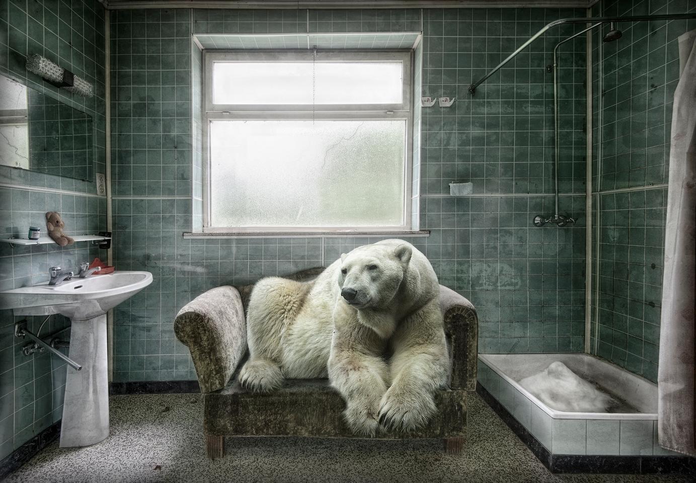 Honorable Mention - Polar Bear Pet