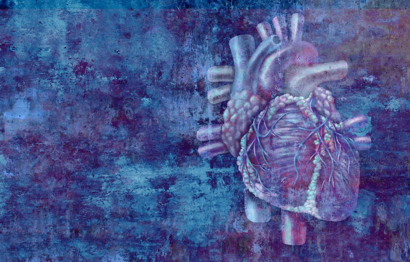 Placental stem cells have been found to regenerate damaged heart cells after a heart attack
