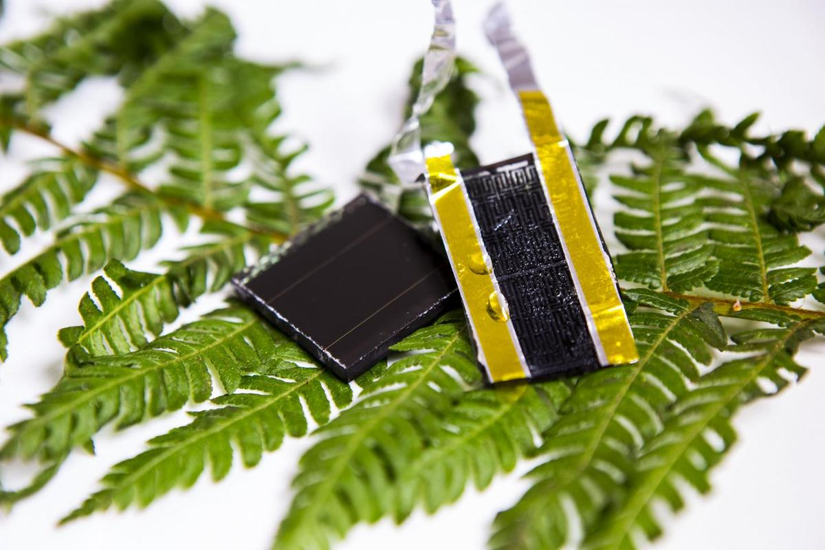 A new electrode design, inspired by the fractal pattern of veins in a fern leaf, could boost the energy capacity of supercapacitors30 times over