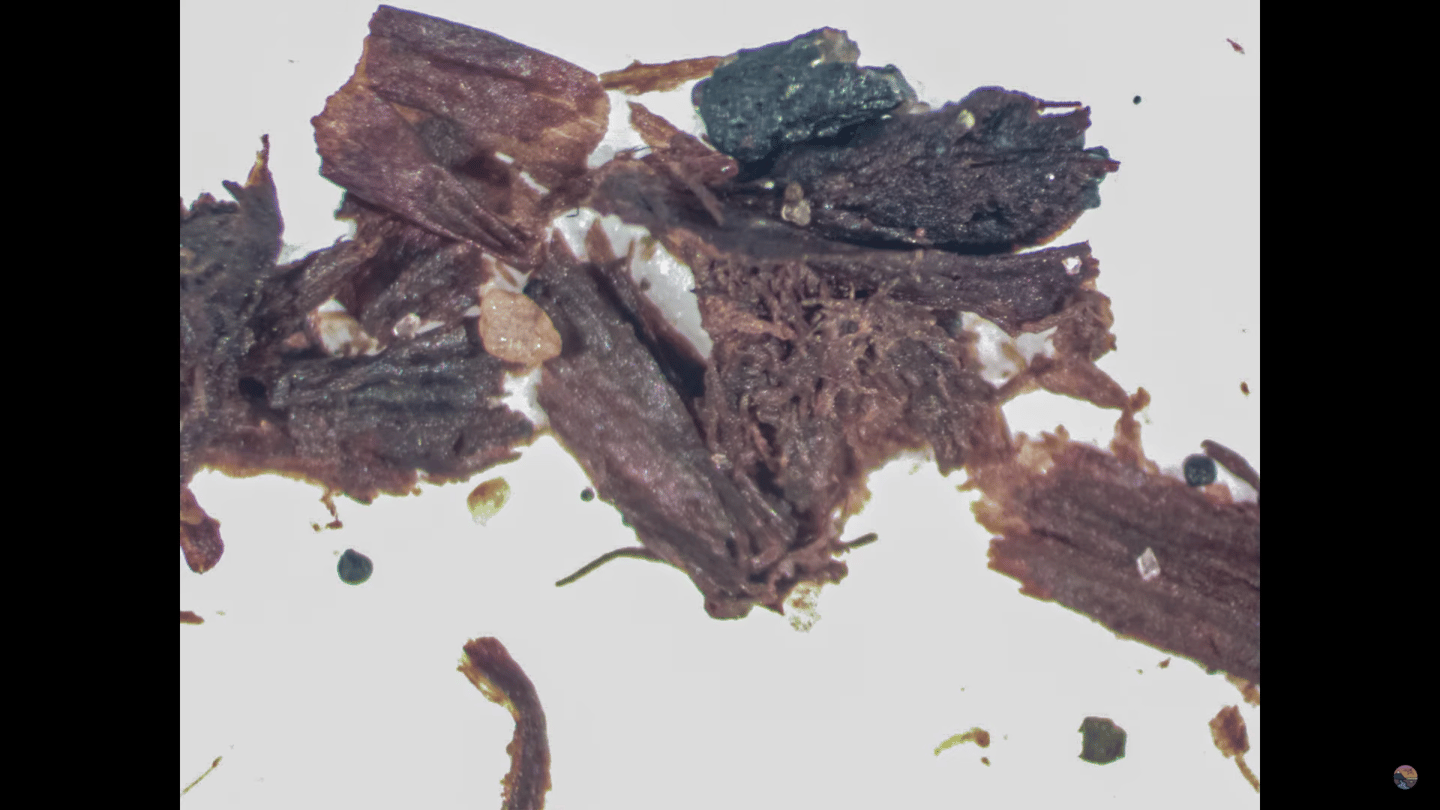 The soil samples from the ice core drilled deep beneath the Greenland ice sheet contained clear evidence of fossilized plant life