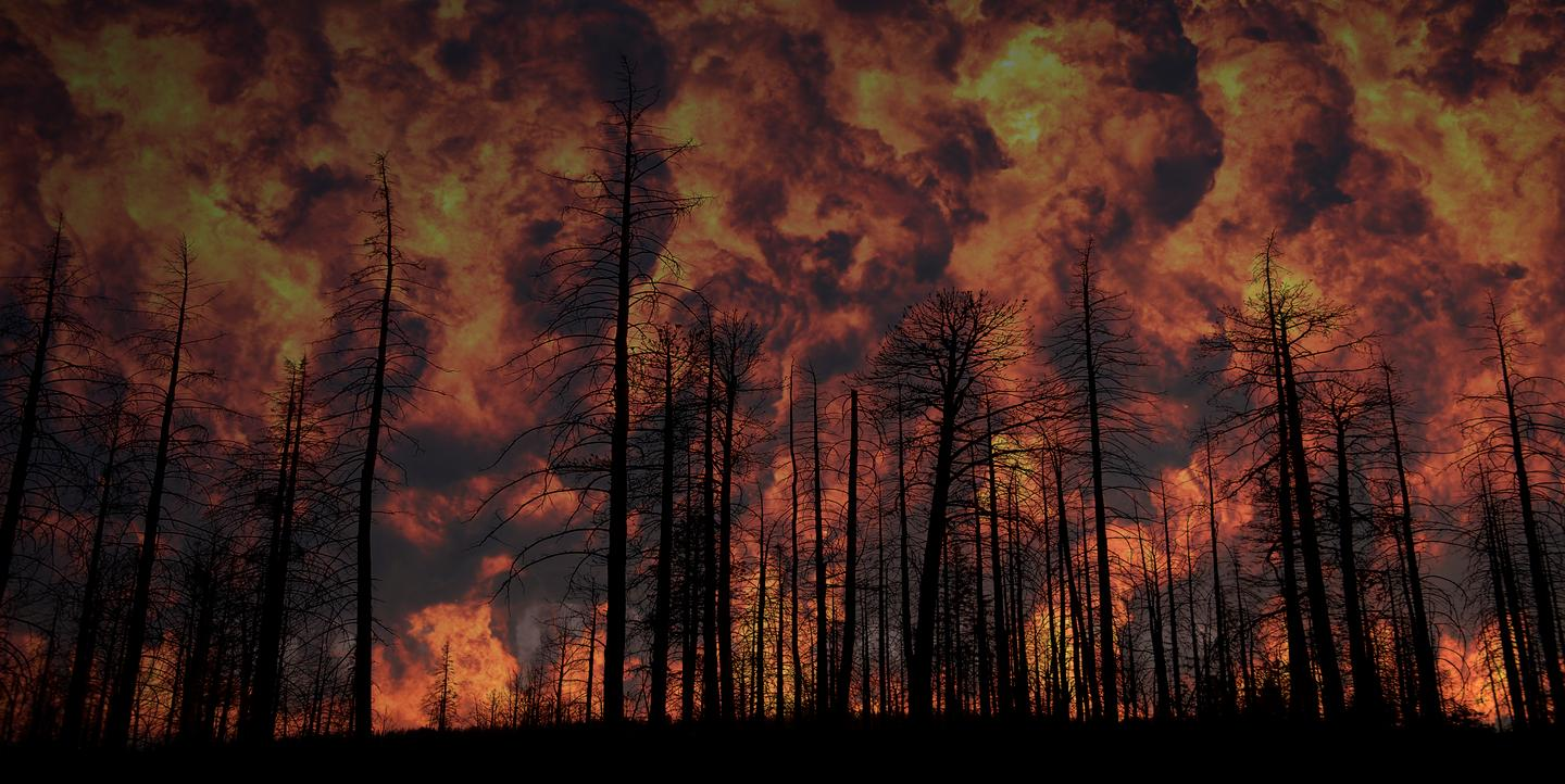 The gel could be preemptively applied to vegetation in areas where forest fires are likely to occur