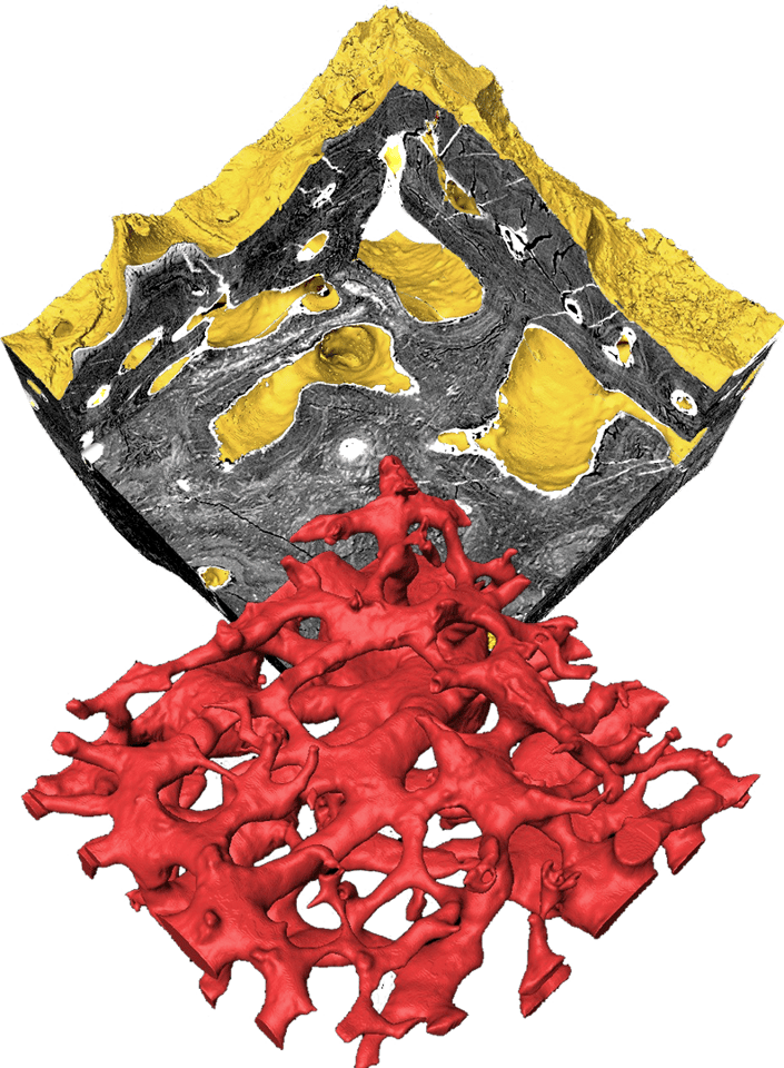 The researchers examined the heterostracan skeleton closely using Synchrotron Tomography to identify the structure and finally determine what type of tissue aspidin is