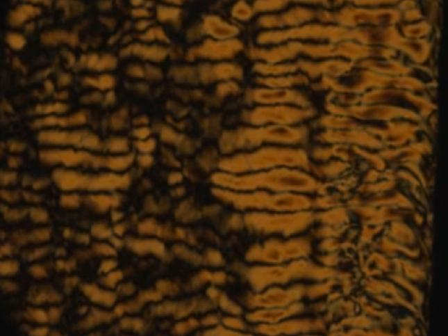 Patterns created by bacteria swimming through the living liquid crystal