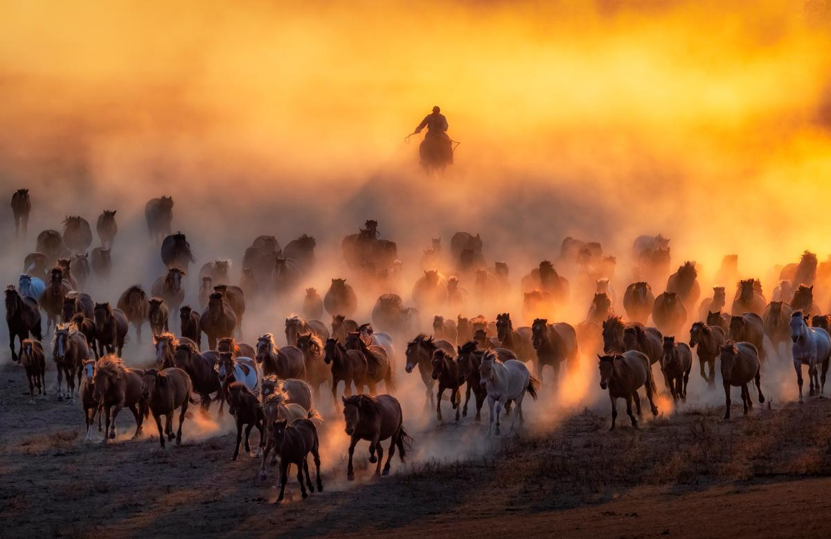 "Winner, Malaysia. ""Descend From Above"". Mongolian horse herding"
